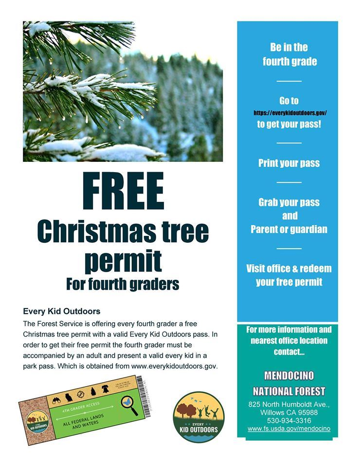 Free Christmas Trees for Fourth Graders