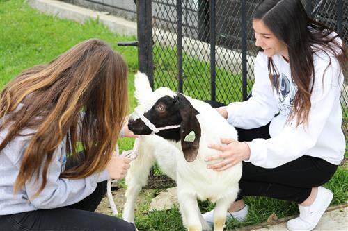 Students petting goat